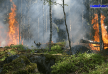 Self-powered alarm fights forest fires, monitors environment